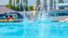 Camping familial avec piscine Argelès sur mer